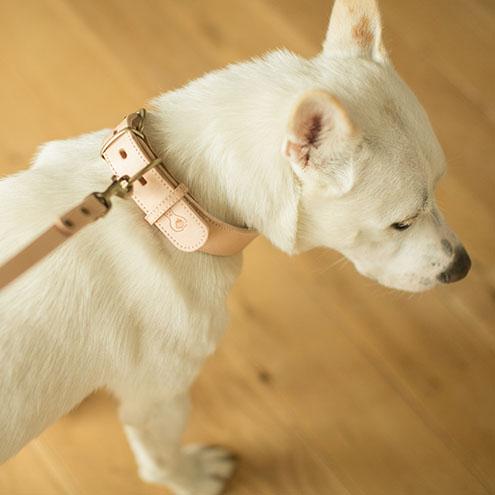 飽きのこないシンプルなリードです。皮革製なので、滑りにくく耐久性があり、より丈夫にするため2枚の革を合わせて縫製しています。また、首輪とリードを繋ぐナスカンは、熟練の職人がひとつひとつ手作業で取り付けており、非常に丈夫にお作りしています。愛犬をコントロールしやすいように、それぞれの大きさに合わせて3タイプの長さをご用意いたしました。同じ国産の牛ヌメ革で作られた首輪とセットでお使いいただくと、より毎日のお散歩やお出かけが楽しくなります。ヌメ革がどんどん色を変え、風合いゆたかになっていく様子は、愛犬と共に生きている証です。一生モノとしてお使いいただけます。いちごペット用品店 牛ヌメ革カラー(犬用首輪)はコチラ