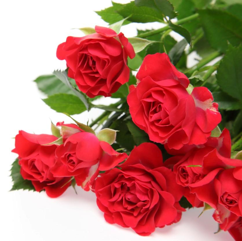 薔薇を蒸留し生成され、薔薇そのものの成分が溶け込んでいる水です。 香りも香料等を添加していないので、薔薇本来のやさしくふんわりと甘い香りを感じる事ができます。 またローズウォーターが持つ保湿、抗菌、殺菌作用を用いて生活のいろんな場面で活用されてきました。